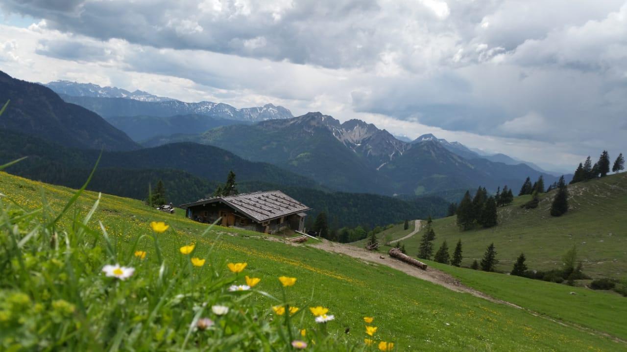 Almwiesen im Mangfallgebirge - blühende Wiesen und Bergpanorama